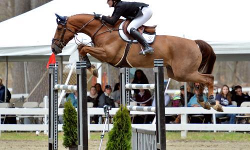 HorseShow-Catherine TyreeSandor