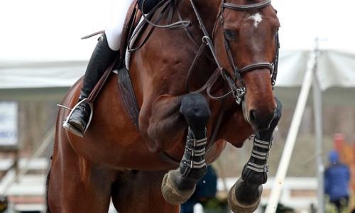 HorseShow-Diederique VanDerKamp