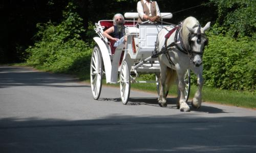 horse-carriage-loon-meadow (2)