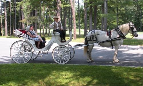 horse-carriage-loon-meadow (3)