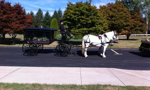 horse-carriage-loon-meadow (5)