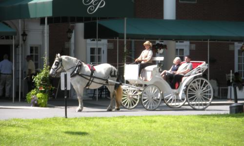 horse-carriage-loon-meadow (6)