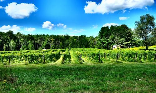 Upper Hudson Valley Wine Trail (7)
