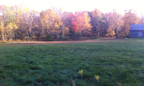 Loon Meadow Farms Bed & Breakfast (3)