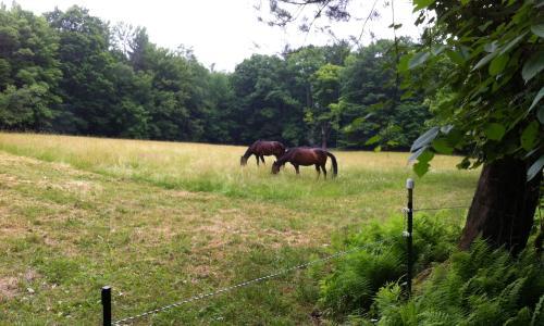 Loon Meadow Farms Bed & Breakfast (6)