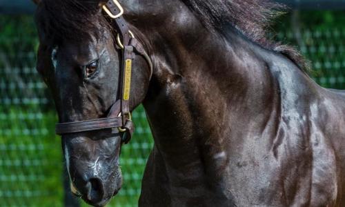 Sugar Plum Farm powerful horse with flowing mane