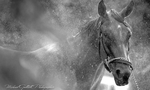 Metroland Photo B&W Horse Sprayed
