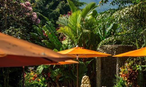 Live Life Travel Nayara Resort in Costa Rica