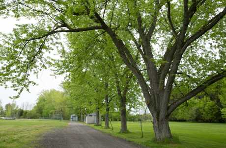 Cayuga Village Recreational Trail
