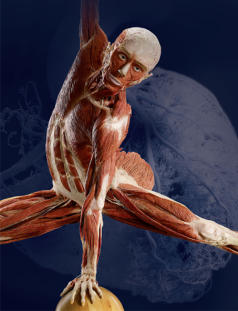 Body Worlds at MOSI