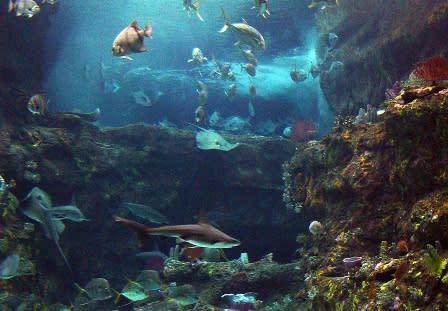 Aquarium Main Tank