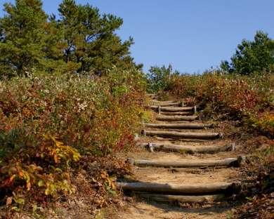 Hudson Mohawk Bird Club Fall Bird Hike