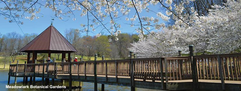 National Cherry Blossom Festival - Meadowlark Gardens - Spring