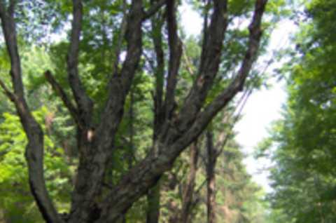 Brookfield Trail System