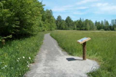 Nelson Swamp Unique Area