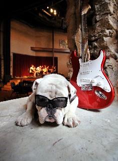 Music Dawg