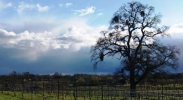 Amador County Vintners Association