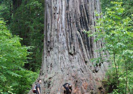 4312Pbig tree.jpg