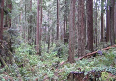 519P3ARCATA FOREST 4.jpg