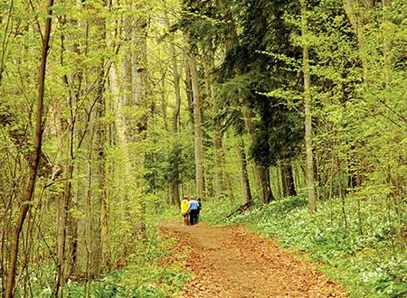 Treat Farm trail