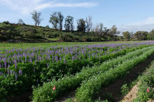 Native Seed Farm
