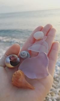 Seaglass and Seashells