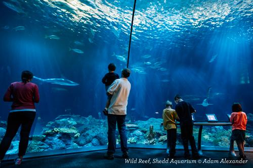 Families looking at exhibit at Shedd Aquarium in Chicago IL