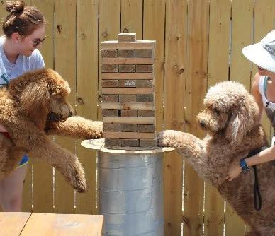Rikenjaks - Dogs Playing