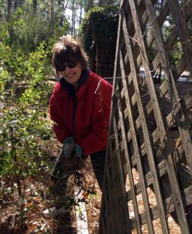 "Marcia Gromada, a weekly ""Garden Keeper"" spreads mulch around a new planting in the demonstration garden at Cedar Point."