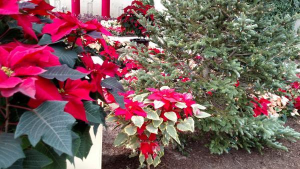Botanical Conservatory- Fort Wayne