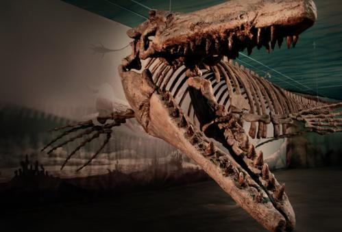 Mosasaur at the Canadian Fossil Discovery Centre