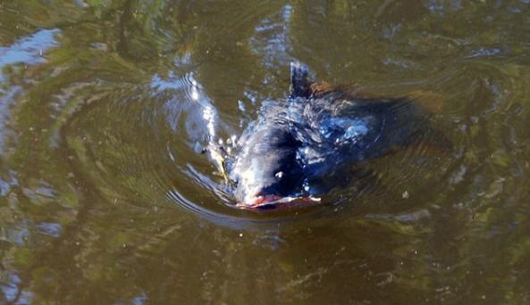 fishilove.jpg