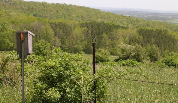 Finger Lakes National Forests -  Photo Courtesy of Finger Lakes National Forest