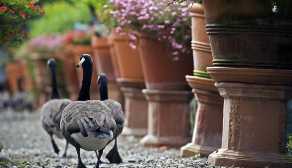 Berkshire Bird Paradise