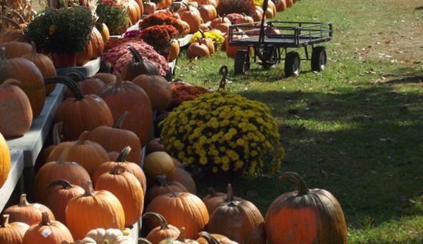 Schuyler Farms - Photo Courtesy of Schuyler Farms
