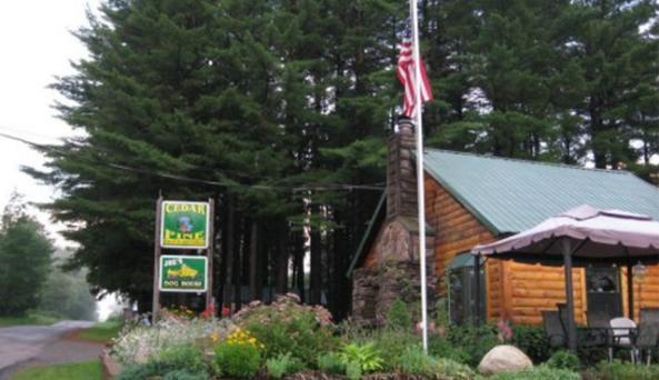 Cedar Pine