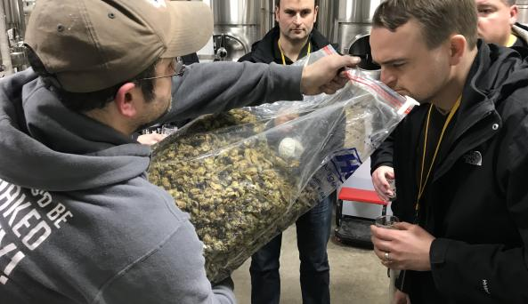 Smelling Hops on Behind the scenes NYC Brewery Tour
