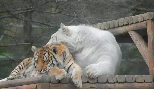 The Wild Animal Park
