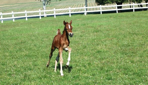 Miner happy baby horse