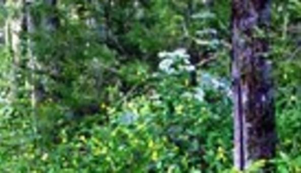 Goudy Pond Wilderness Cabin RentalsSign