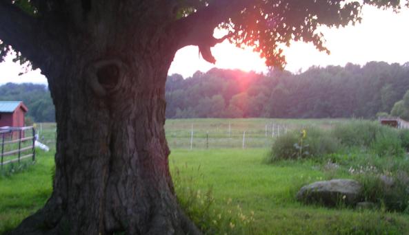 Greenwood Hill Farms