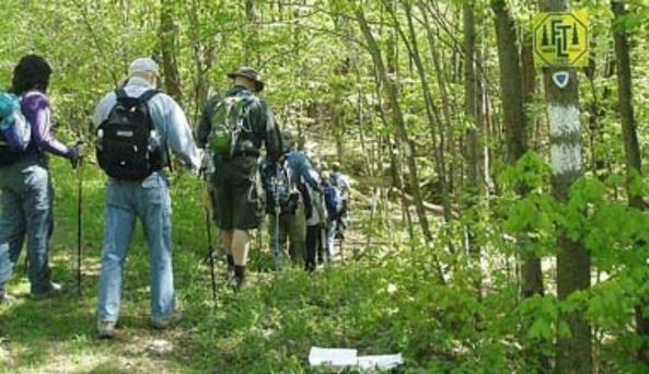 Klipnocky Forest