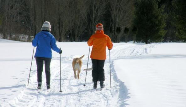 ski with dog