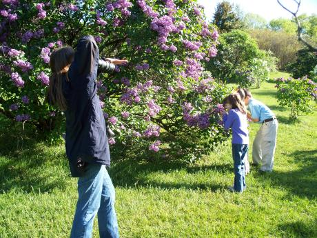 Kids smell the lilacs for a photo in Rochester's Highland Park