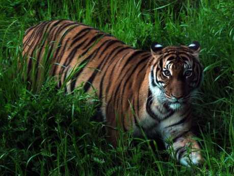Virginia Zoo
