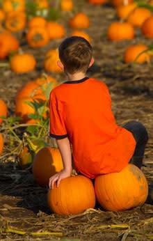 Pumpkin Patch by David Putzier