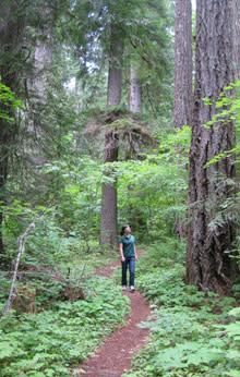 Hiking Aufderheide by Natalie Inouye