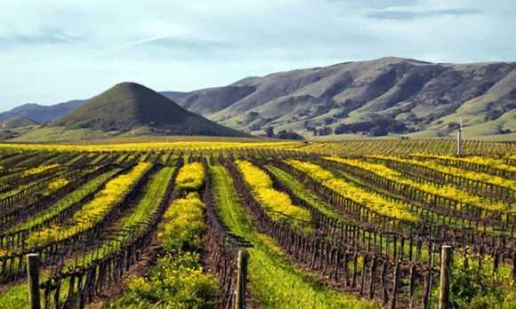 Vineyards_Edna_Valley_San_Luis_Obispo_CA-1lg.jpg