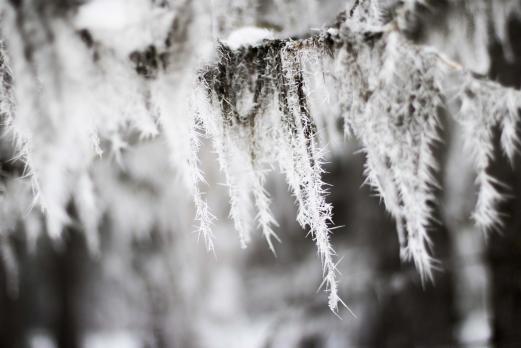 Frosty Moss