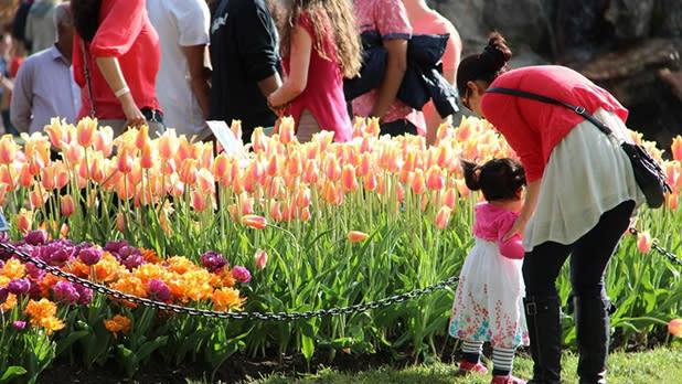 Albany Tulip Festival - Photo Courtesy of Albany Tulip Festival